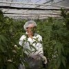 Israel marijuana: Users to face fine rather than criminal charge